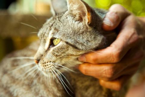 feline behavior issues